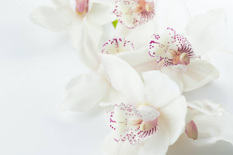 Jak skutecznie odświeżyć sztuczne białe kwiaty?